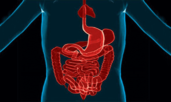 x-ray image of the intestinal tract